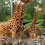 Family Zoo Pass