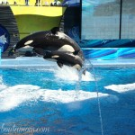 A Jolly Good Time at SeaWorld in Orlando