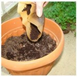 Reusing Everyday Waste by Reusing Coffee Grounds for Gardening