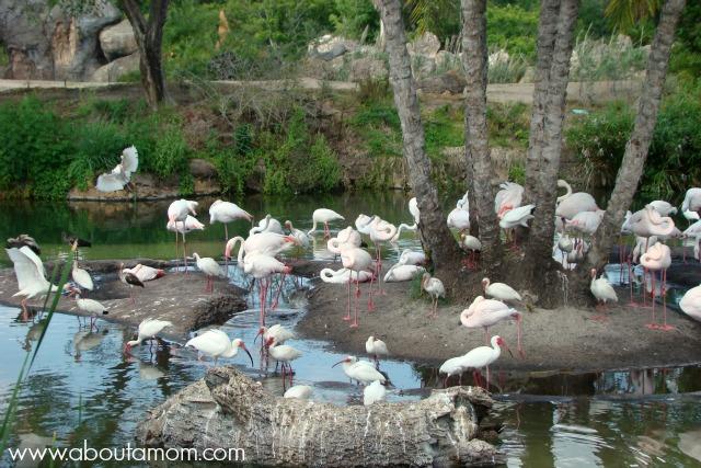Image of: Disneys Animal Kilimanjaro Safaris At Disney Animal Kingdom About Mom Wild Ride On Kilimanjaro Safaris At Disney Animal Kingdom About Mom