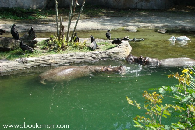 Kilimanjaro Safaris at Disney Animal Kingdom