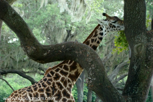 Kilimanjaro Safaris at Disney Animal Kingdom