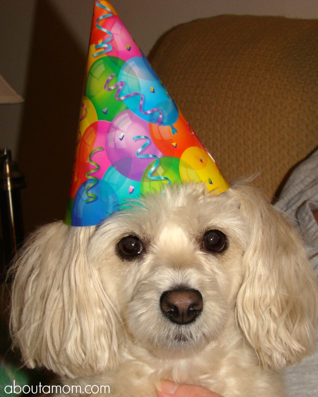 Puppy Party Ideas - Party Guest
