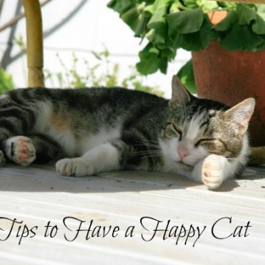 Tips to Have a Happy Cat