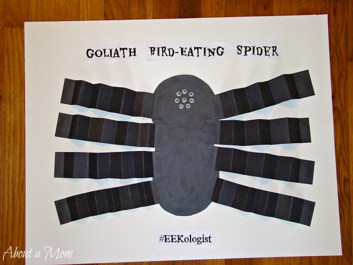 Orkin Ecologist Spider Crafts