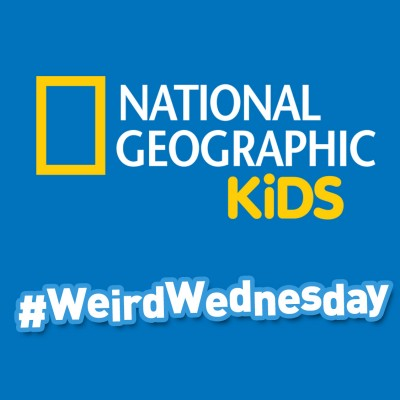 National Geographic Kids Weird but True #WeirdWednesday