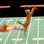 Hallmark Channel's Kitten Bowl and Rachael Ray's Nutrish for Cats #kittenbowl