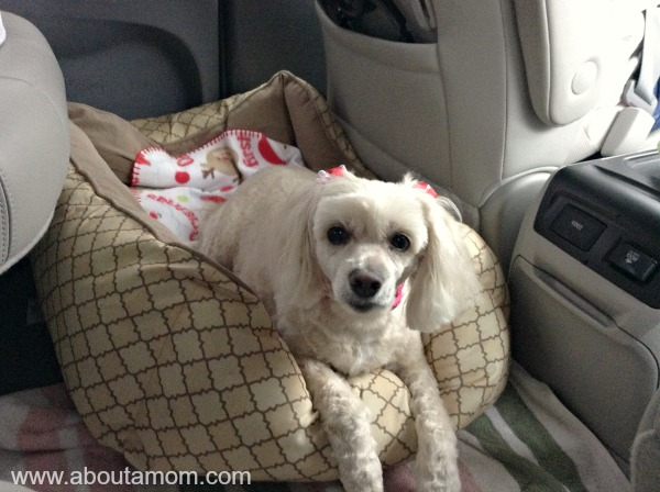 Traveling with Dogs - Toyota Sienna
