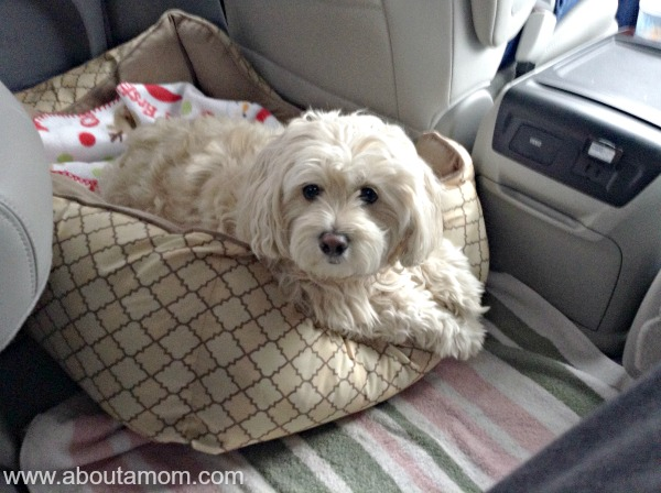 Traveling with Dogs in the Toyota Sienna