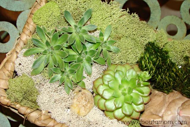 diy indoor succulent garden about a mom