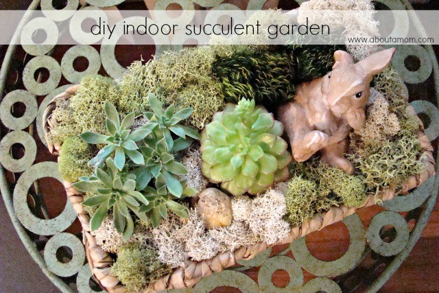 DIY Indoor Succulent Garden About A Mom