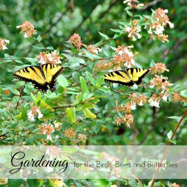 Gardening for the Birds, Bees, and Butterflies
