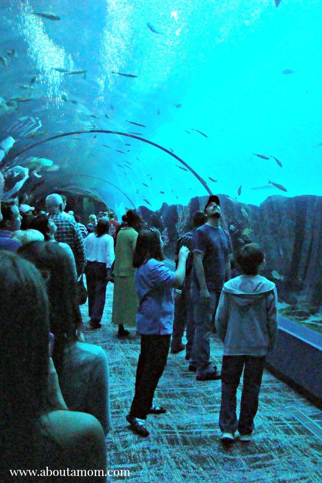 Georgia Aquarium Ocean Voyager