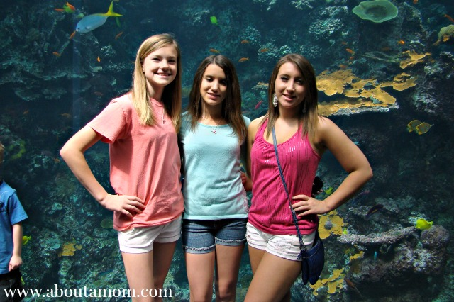 Spring Break Fun at Georgia Aquarium in Atlanta, Georgia