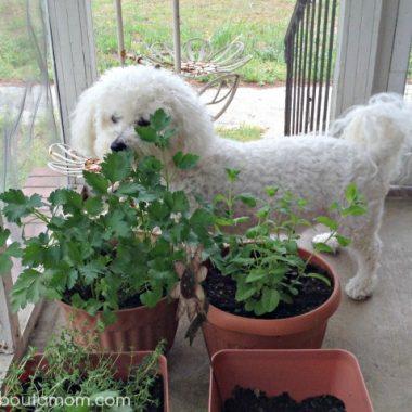 The Dog Ate My Garden