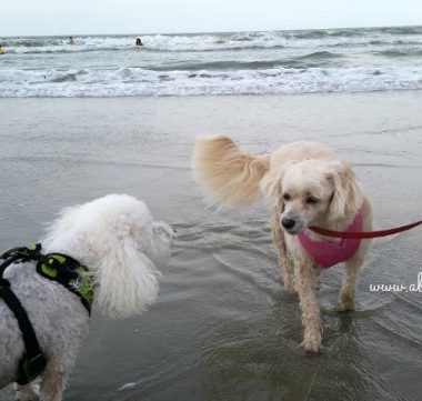 Vacationing with Dogs