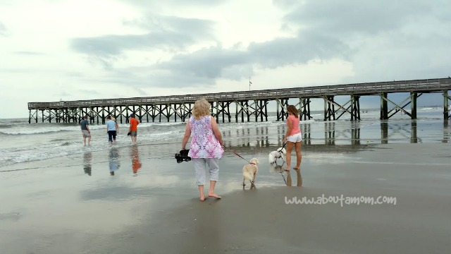 beach trip with the dogs