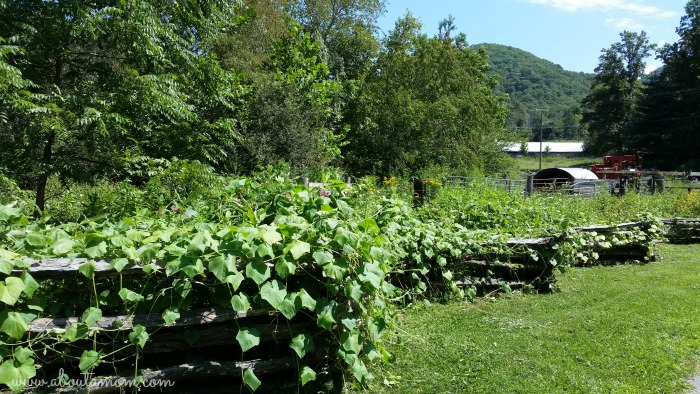 Hickory Nut Gap Farm in Asheville