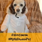 Halloween Pet Costume Contest on About A Mom #MyHalloweenPet