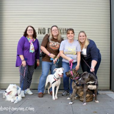 Northern California Family Dog Rescue - Making Happy Families