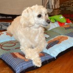 4 Great Dog Travel Accessories!