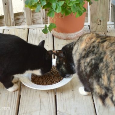 Rachael Ray Nutrish Zero Grain Cat Food