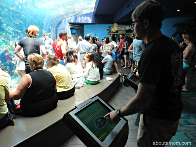 Summer Fun at Georgia Aquarium