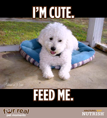 """Don't Miss the Nutrish """"Fur Real Pet Moments"""" Contest"""