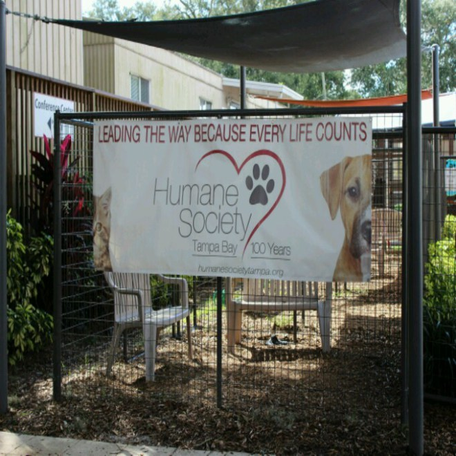 puppies and pumpkins at your local humane society   about