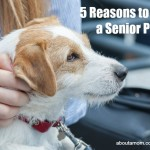 5 Reasons to Adopt a Senior Pet