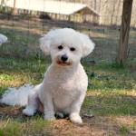 Spring Dog Care Essentials