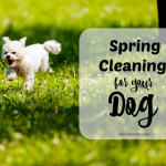 Spring Cleaning for your Pets