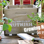 Growing Herbs for Cats + Nutrish Zero Grain Chicken & Potato Giveaway!