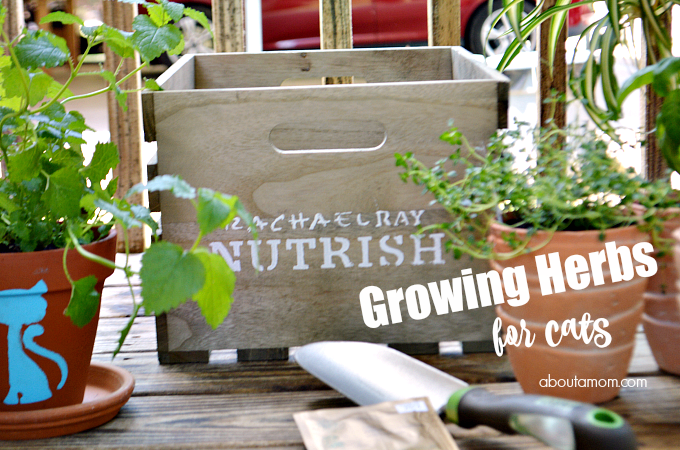 Growing Herbs for Cats + Nutrish Zero Grain Chicken & Potato