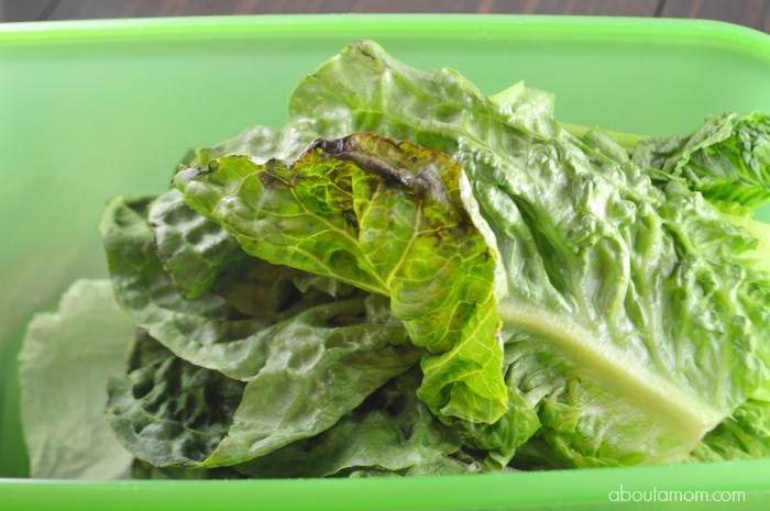 lettuce not put into FreshWorks