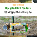 How to Make Upcycled Bird Feeders and Backyard Bird Watching Tips