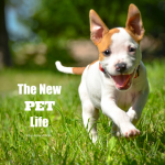 The new pet life. Simple solutions and advice for new pet owners from veterinarian, Dr. Evan Antin.