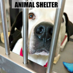 When it comes to helping save the lives of dogs and cats, there are many ways to help your local animal shelter or rescue.