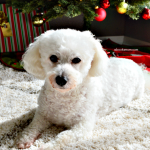 How to Make the Holidays Special for Your Pet