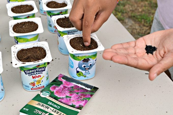 This upcycled seed starting project for kids uses Stonyfield® Organic Kids® multipack yogurt containers. The activity is educational, fun, and a great opportunity to teach kids about ways to lessen their environmental footprint. Also, inspire a love of gardening. It's a wondrous moment when that first seedling emerges!