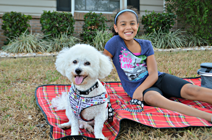 Summer is a time when we all like to spend more time outdoors, and that includes your pets. While you're out having fun in the sun, you can keep pets safe with these summer care tips.