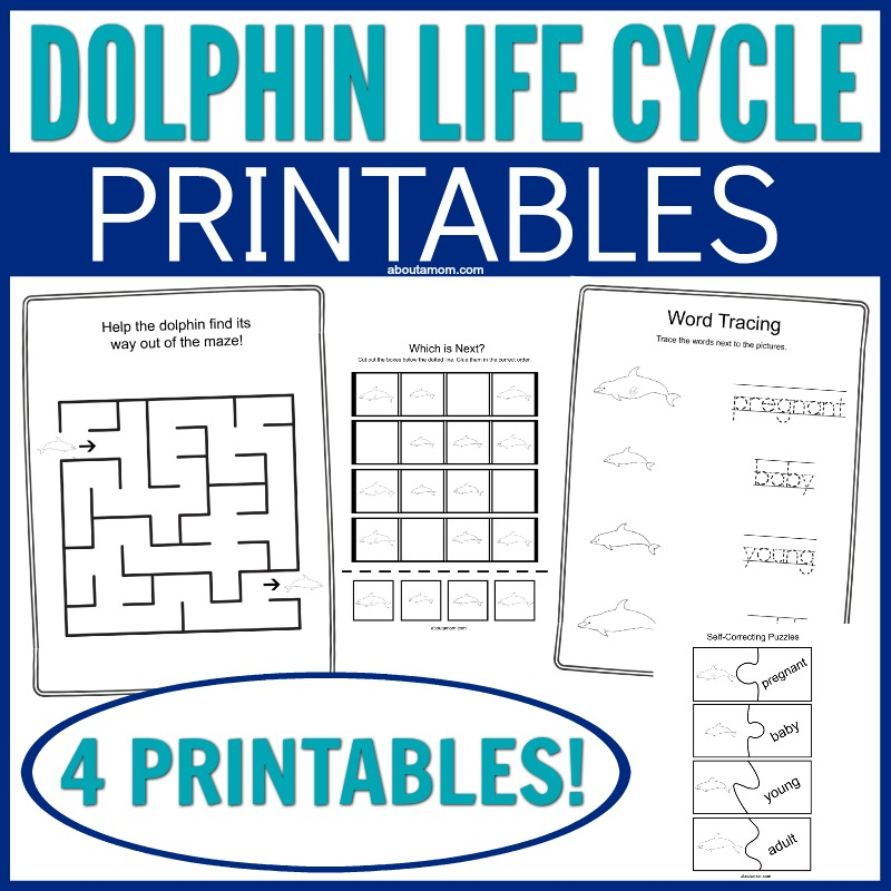 Looking for a fun way to teach kids about the Dolphin Life Cycle? This simple printable set helps kids learn through having fun. It has never been so easy to teach kids STEM and biology.