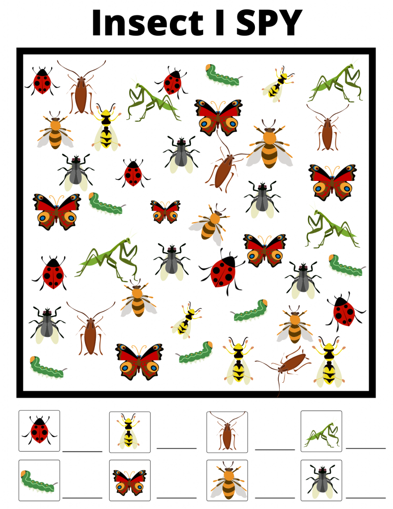 insect I-spy printable